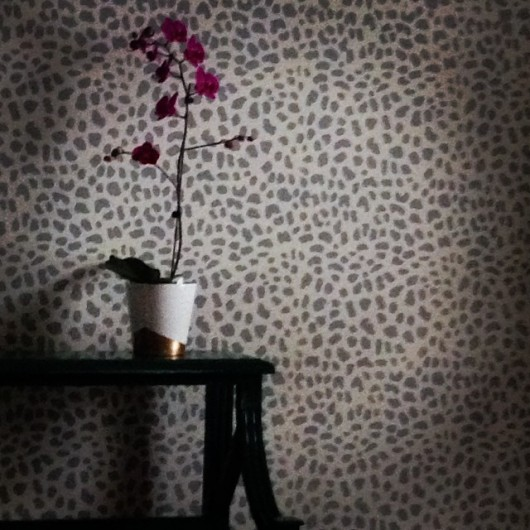 A stenciled accent wall using the Leopard Skin Allover pattern. http://www.cuttingedgestencils.com/leopard-pattern-animal-skin-stencil.html